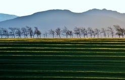 Leafles Bäume Lizenzfreie Stockfotos