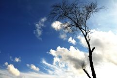 Leafless. A leafless tree with a cloudy sky as a backdrop Royalty Free Stock Image