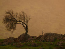 Leafless almond - horizontal. Leafless almond tree in the rain at sunset royalty free stock photography