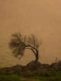 Leafless almond - vertical. Leafless almond tree in the rain at sunset stock photo