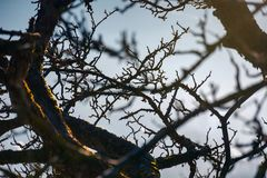 Leafless apple tree branches. Natural autumn background with shallow depth of field Royalty Free Stock Photography