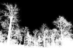 Leafless bare trees isolated on black Stock Images