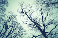 Leafless bare trees over cloudy sky. Monochrome natural background photo with green vintage tonal correction filter effect stock photos