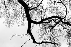 Leafless bare trees over gray sky background. Monochrome silhouette photo Royalty Free Stock Images
