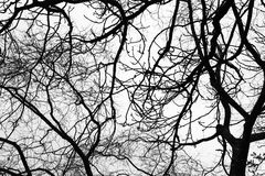 Leafless bare trees over gray sky background. Monochrome silhouette photo pattern stock photography