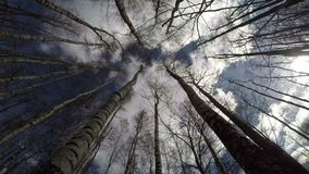 Leafless birch tree forest in spring and beautiful clouds motion. Leafless birch tree forest in spring and beautiful white clouds motion, time lapse stock video