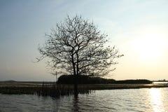 Leafless bomen langs de alleen rivier Royalty-vrije Stock Foto