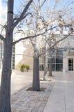 Leafless Bomen in Lijn Royalty-vrije Stock Foto's