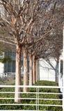 Leafless Bomen in Lijn Royalty-vrije Stock Fotografie