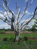 Leafless boom Royalty-vrije Stock Foto's