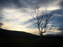 Leafless boom in het padieveld en de berg royalty-vrije stock afbeeldingen