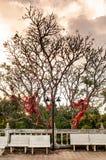 Leafless boom met rode linten bond op zijn takken met lege steenbanken bij zonsondergang royalty-vrije stock afbeeldingen