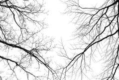 Leafless boomtakken op een bleke witte achtergrond Stock Afbeeldingen