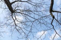 Leafless Boomtakken tegen Donkere Hemelachtergrond Stock Fotografie
