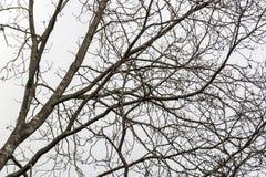 Leafless Boomtakken tegen Donkere Hemelachtergrond Royalty-vrije Stock Afbeelding