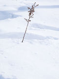 Leafless branch stick on snow - with space for text, word area. Leafless branch stick on snow Royalty Free Stock Images