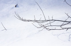 Leafless branch in winter Royalty Free Stock Photography