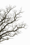 Leafless branches Royalty Free Stock Images