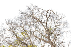 Leafless branches isolated on white background Stock Photos