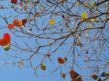 Leafless branches Royalty Free Stock Image