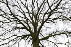 Leafless branches stock photos