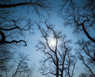 Leafless branches. Leafless branches on sky background. Wide angle lens shot royalty free stock photos
