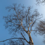 Leafless branches. Stock Photos