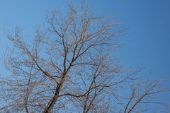 Leafless branches. Royalty Free Stock Photos
