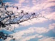 Leafless branches of tree against sky. Abstract silhouette image, Leafless branches of tree against sky stock photo