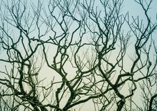 Leafless branches of tree against sky. Abstract silhouette image, Leafless branches of tree against sky royalty free stock images