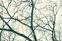 Leafless branches, vintage toned colors Stock Image