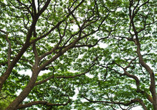 Leafless branches Royalty Free Stock Photos