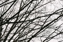 Leafless branches in winter. Dry and Leafless branches in winter stock photo