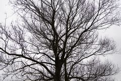 Leafless branches in winter. Leafless branches in winter season stock photo