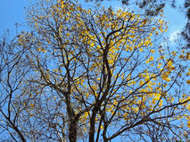 Leafless branches and yellow flowers Royalty Free Stock Images