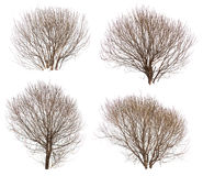 Leafless bushes collection Stock Photo