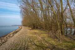 Leafless bushes on a groyne in the river Stock Image