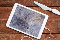 Leafless cottonwood trees in winter. Reviewing an aerial image on a digital tbalet stock image