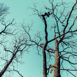 Leafless dare trees over sky background. Natural backgroun Stock Photos