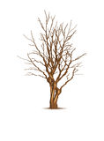 Leafless dry tree Royalty Free Stock Photos