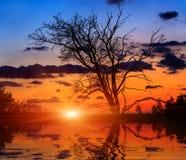 Leafless eiken boom op zonsondergangachtergrond stock afbeeldingen