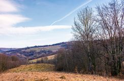 Leafless forest on a meadow with weathered grass. Lovely Carpathian countryside in springtime Royalty Free Stock Images