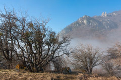 Leafless forest in mountains Stock Photography