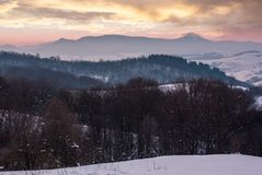Leafless forested hills at winter dawn. Beautiful mountain ridge with high snowy peak in the distance. Carpathian area near Pikui mountain Stock Image