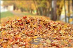 Leafless leaves in autumn season. Photo taken in moscow royalty free stock images