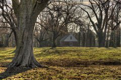 Oak trees on ranch. Leafless oak trees on ranch in Williamsburg, Virginia on an early winter dawn Stock Photo
