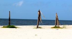 Leafless Palmen langs een afgezonderd strand Stock Foto's