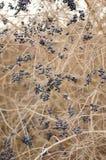 Leafless shrub Stock Photography