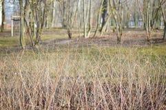 Leafless shrub Royalty Free Stock Images