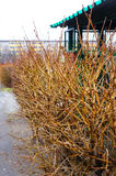 Leafless shrub. Leafless twigs of a shrub in the winter season stock photography